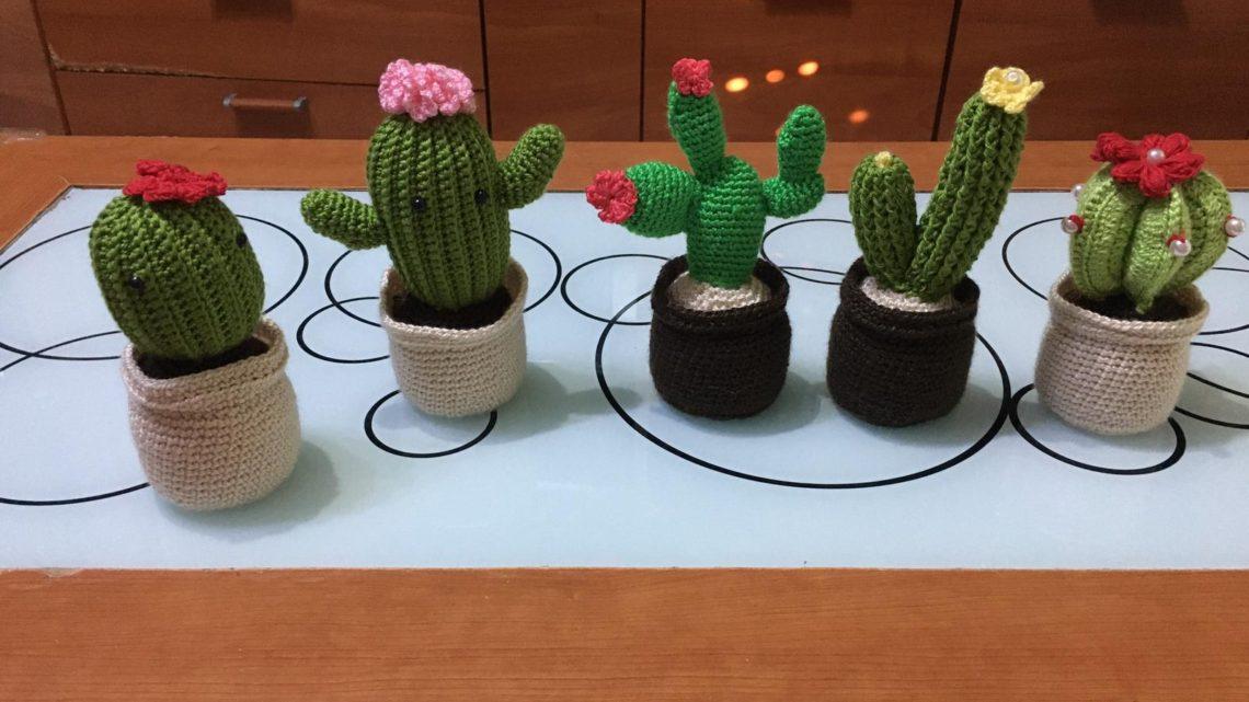 Nuevos cactus